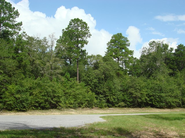 Lot 20 WOODLAKE COURT, Leesburg, Georgia image 1