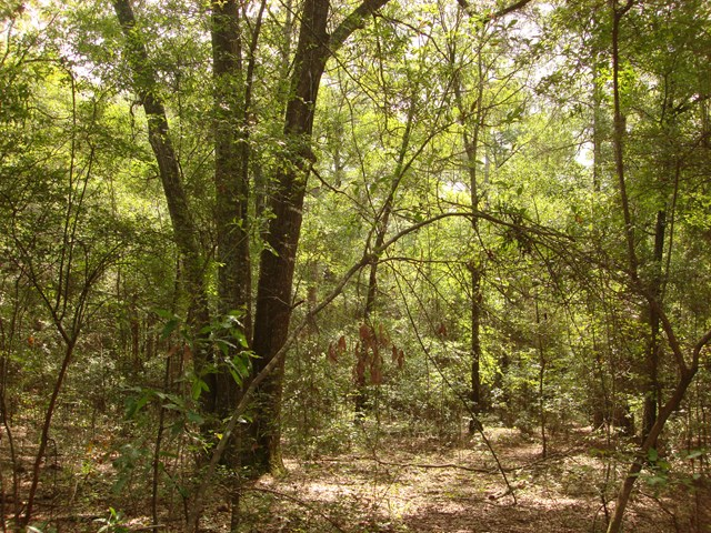 Lot 20 WOODLAKE COURT, Leesburg, Georgia image 7