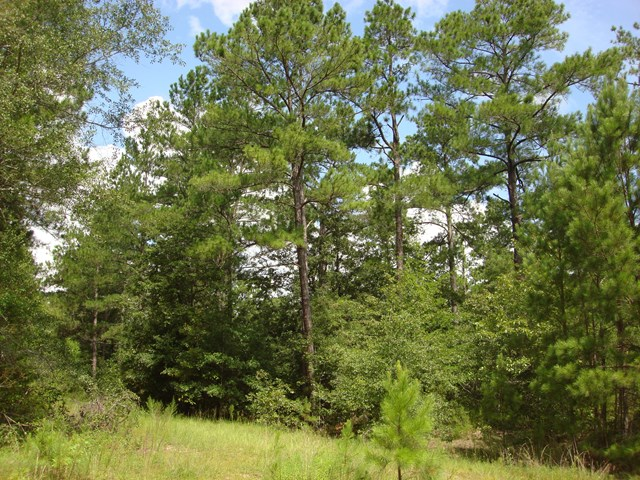 Lot 20 WOODLAKE COURT, Leesburg, Georgia image 8