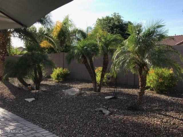 BACKYARD/NEW PALMS