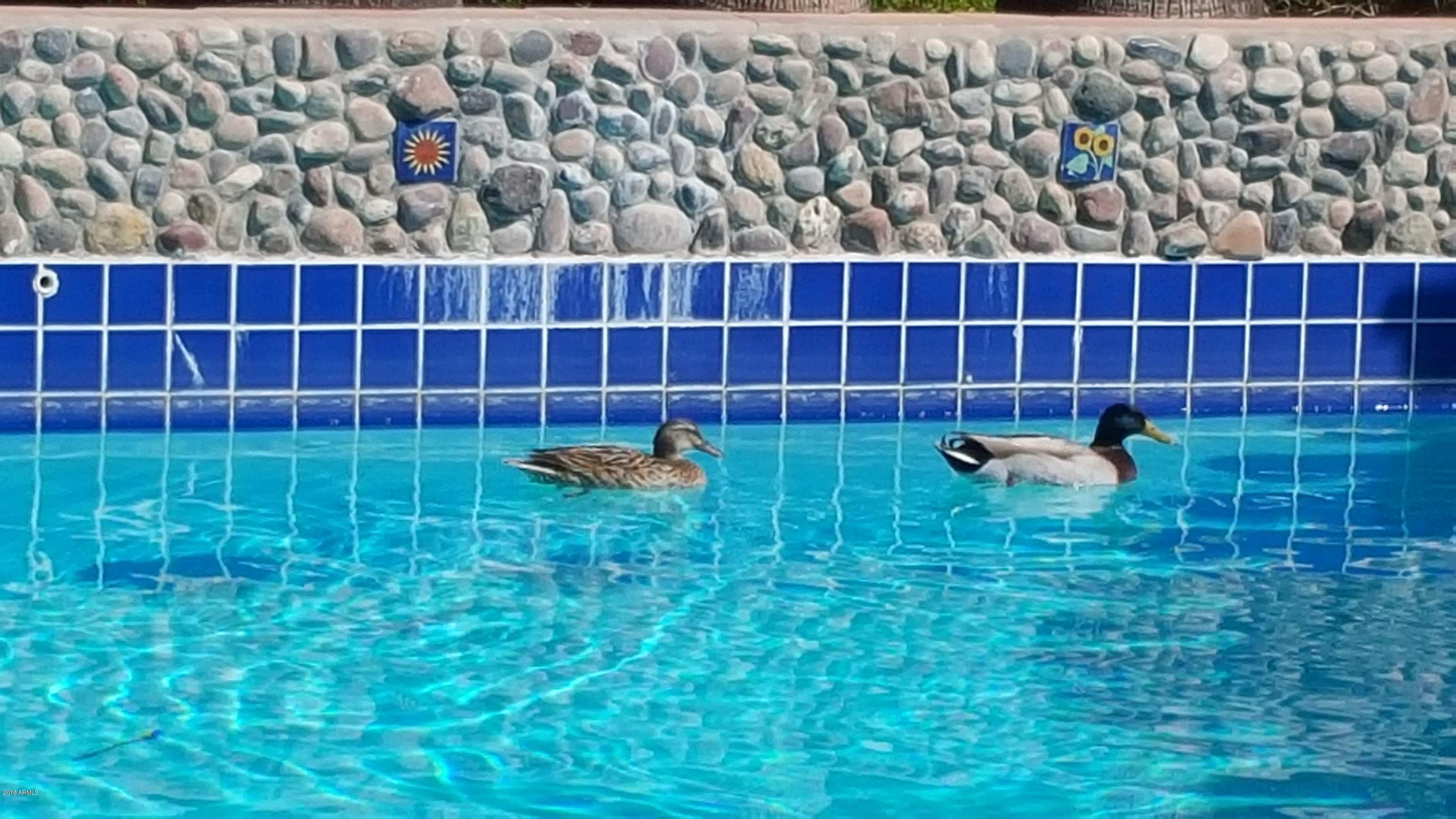 Pool with ducks