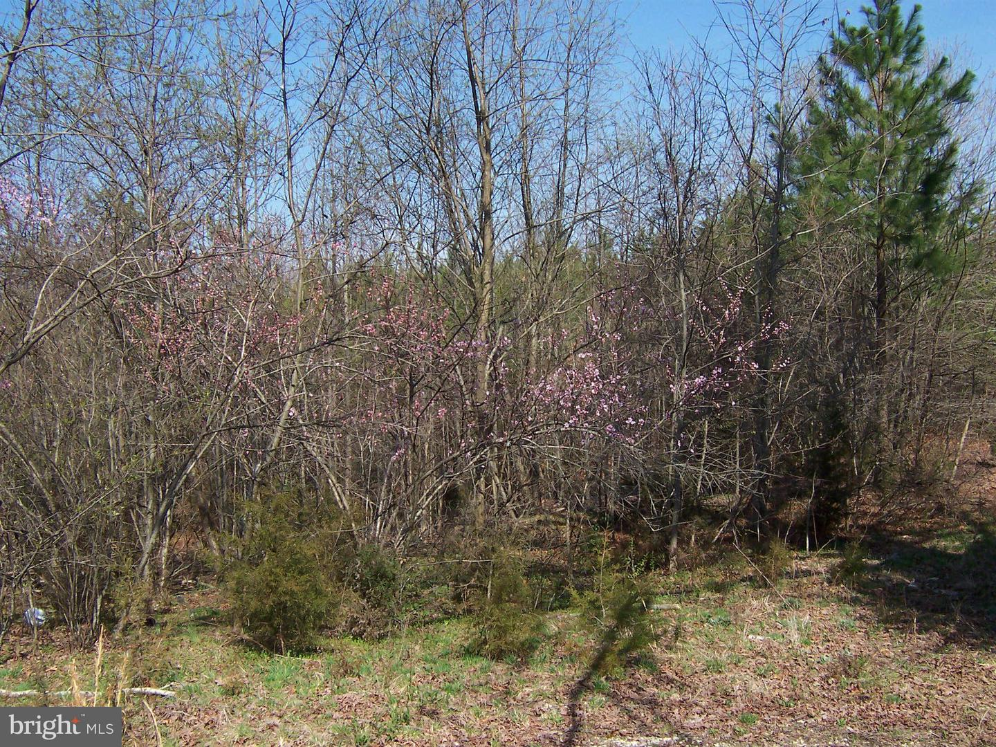MARY LEE DRIVE , DOSWELL, Virginia image 10