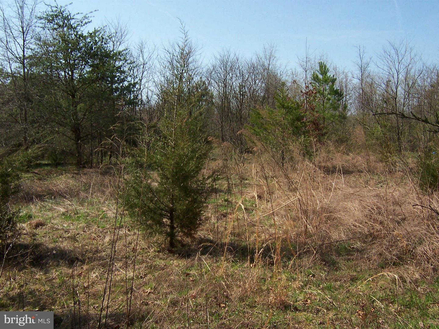 MARY LEE DRIVE , DOSWELL, Virginia image 11