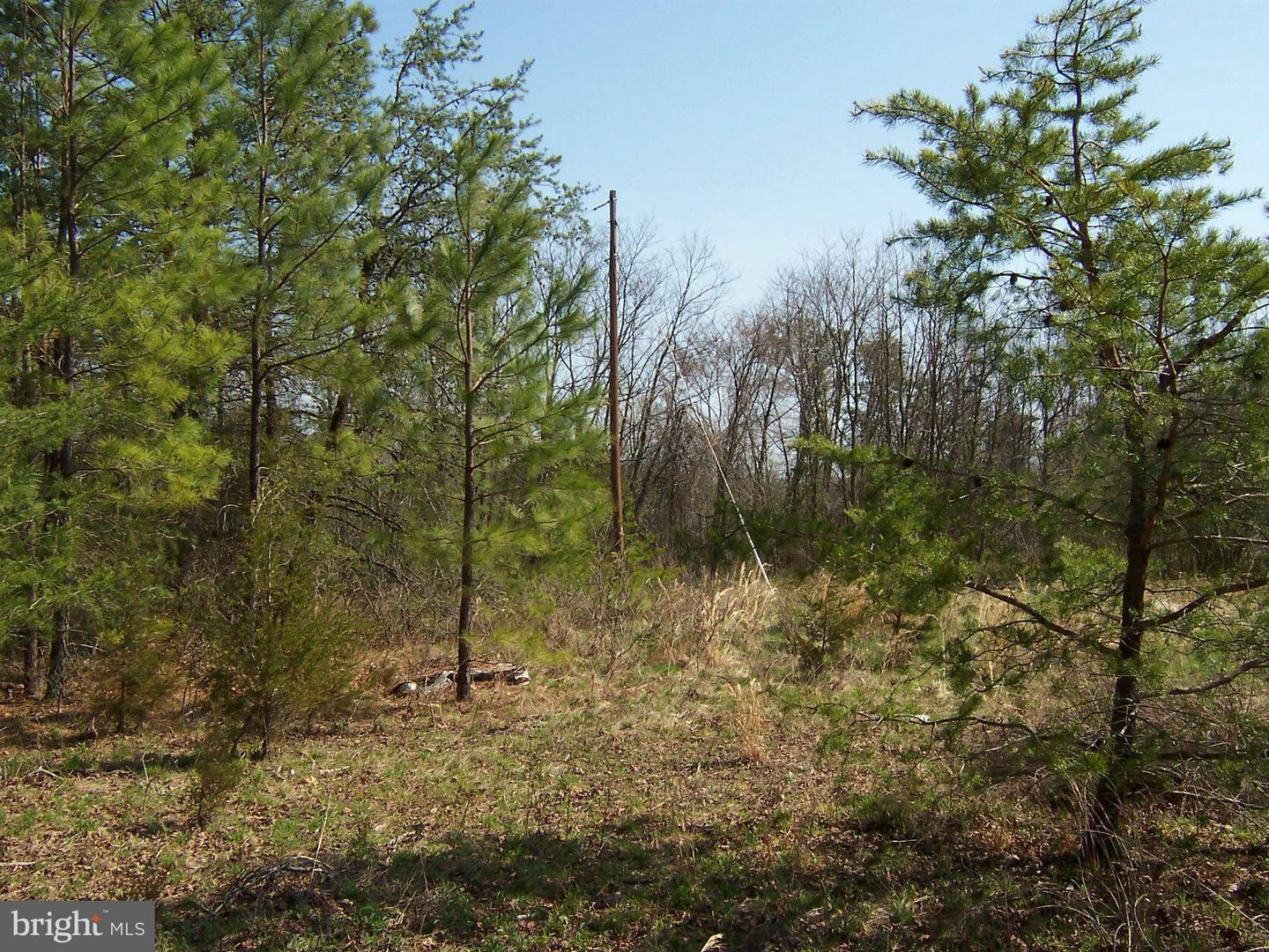 MARY LEE DRIVE , DOSWELL, Virginia image 5