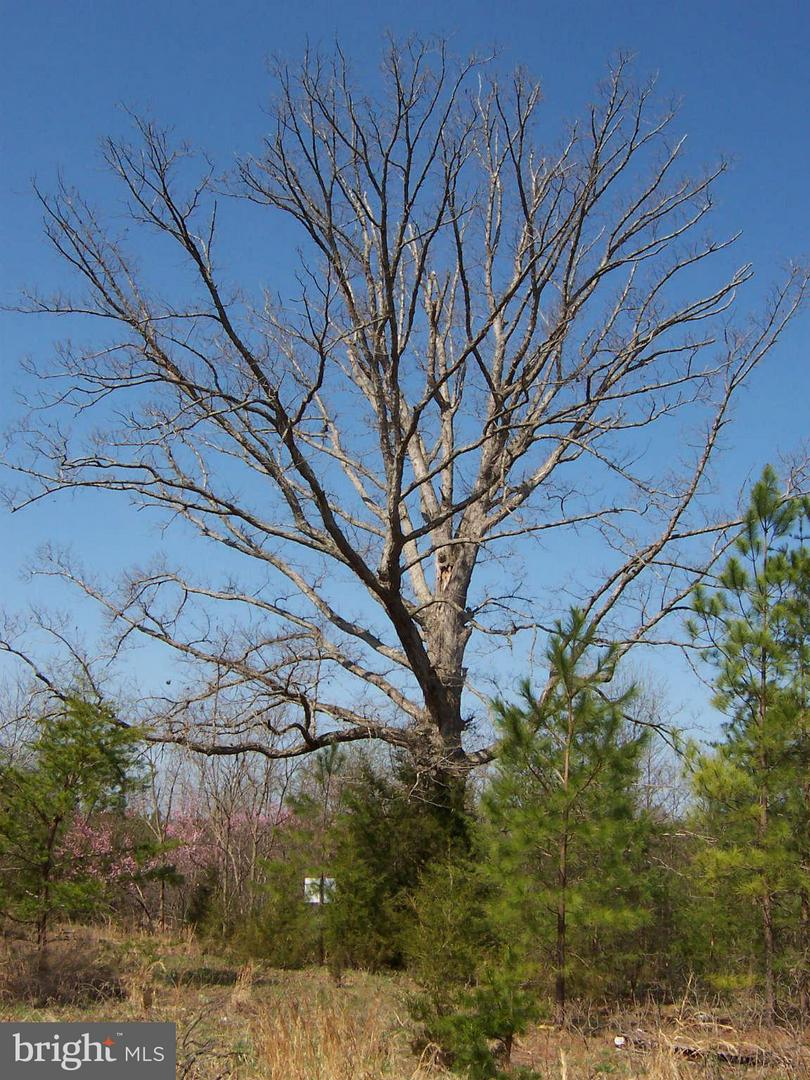 MARY LEE DRIVE , DOSWELL, Virginia image 7